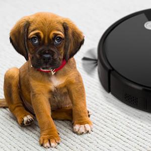 Vídeos de mascotas y robots aspiradores